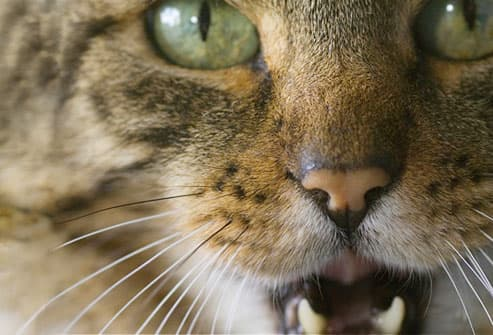 what can cause diarrhea in cats