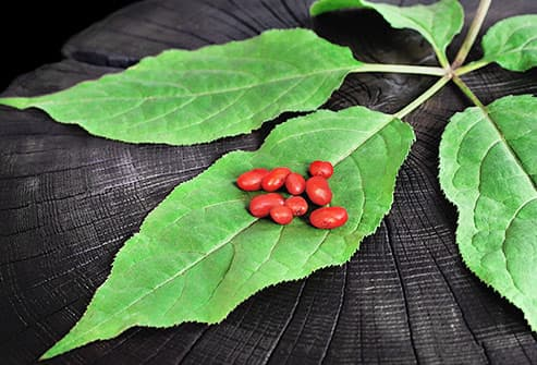 red ginseng berries