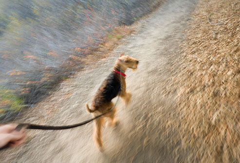 Dog Breed Pictures: The Right Dog for You & Your Health