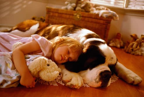 Girl Sleeping on Floor with Saint Bernard