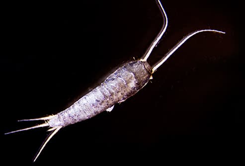 Pictures of Bugs That Live in Your House
