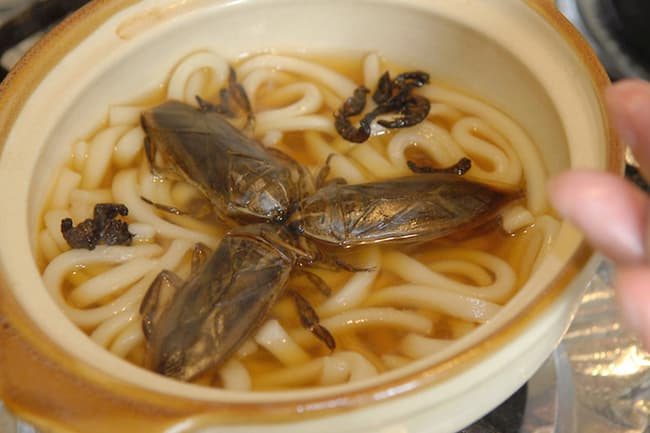 giant water bug soup