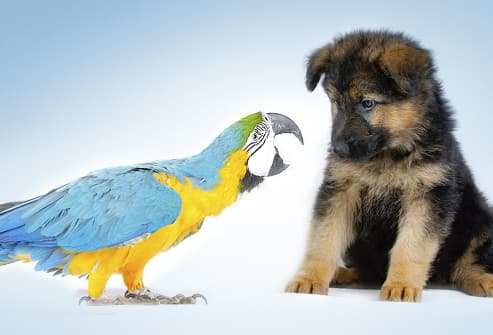 Parrot Squawking At Puppy