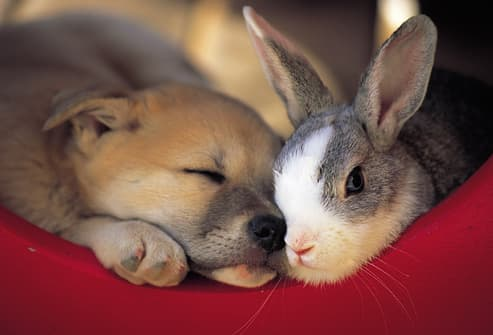 Bunny And Puppy Snuggling