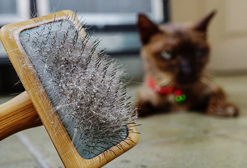 cat and brush with dander