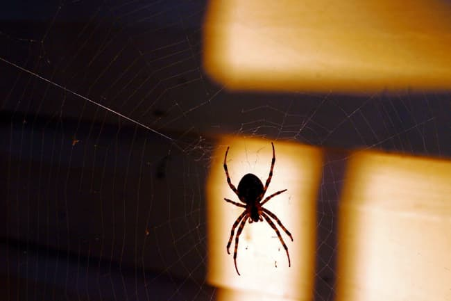 photo of silhouette of spider on web