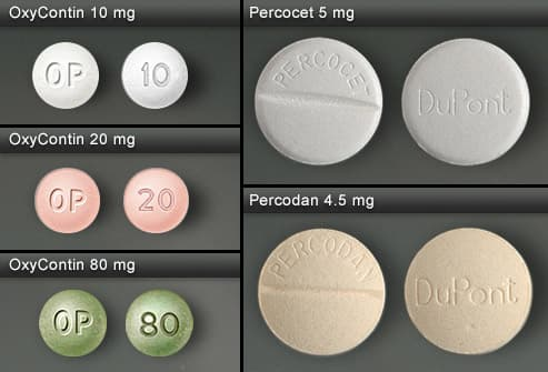 OxyContin, Percocet and Percodan