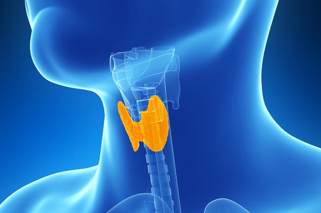 thyroid illustration