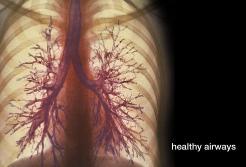 healthy lungs and airways