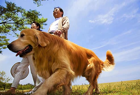 Mature Asian couple walking dog