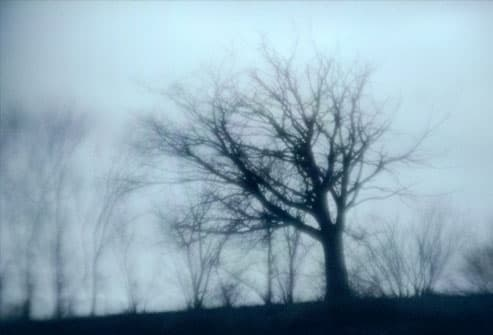 Leafless trees on a dreary winter day