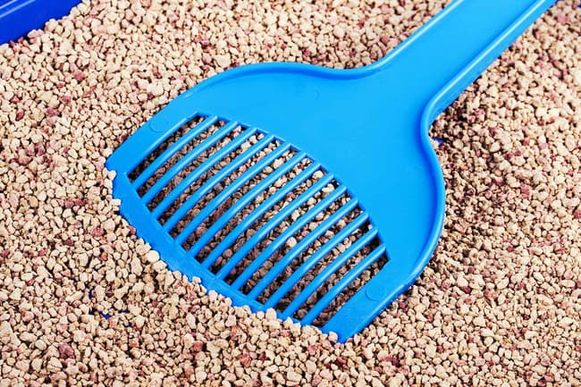 photo of cat litter box and scoop