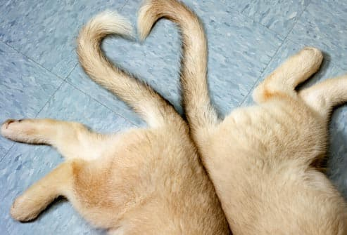 puppies making heart shape