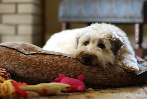 Relaxed dog lying on comfy dog bed