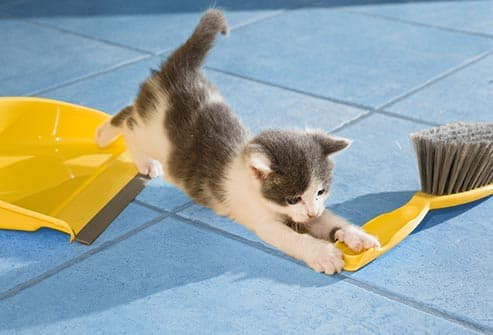 kitten playing with dustpan