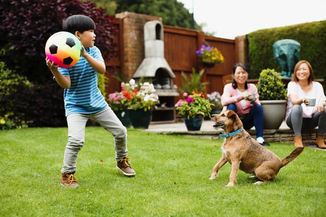 photo of kid playing with dog