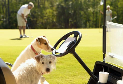 two dogs sitting in golf cart