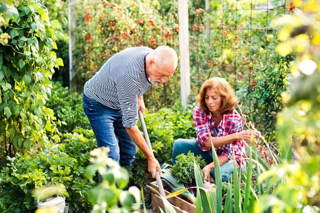 photo of couple gardening together