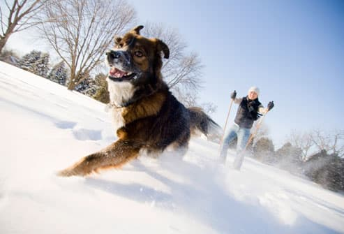 Dog and Man Running in Snow
