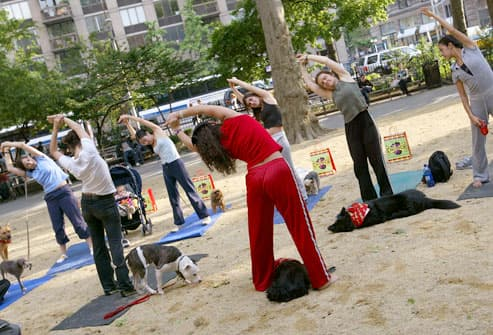 Outdoor Dog Yoga Class
