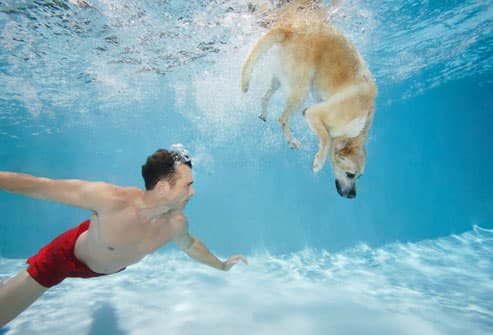Man Swimming With Dog in Pool