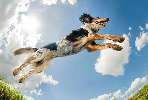 dog jumping through air