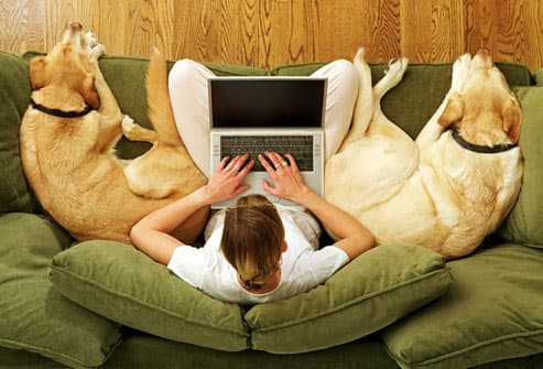 Woman on sofa with dogs, while working from home