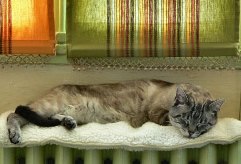 cat sleeping on a radiator under window