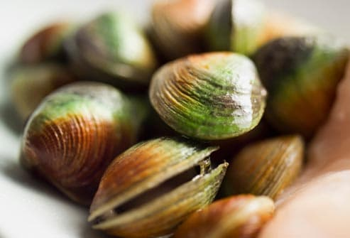 algae coated clams