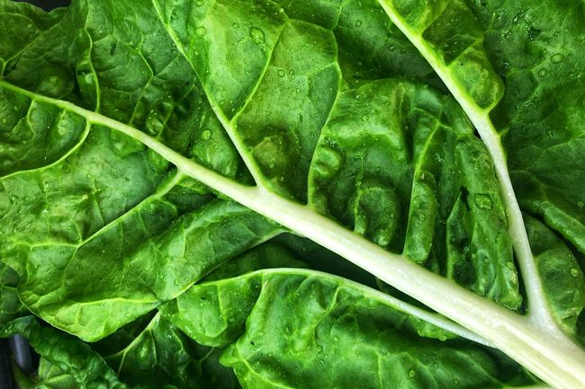 photo of leafy greens
