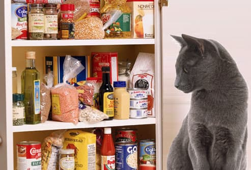 Harmful Foods Your Cat Should Never Eat: Tuna, Milk, Raw Fish, and More