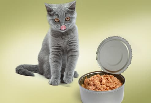 Is It Bad If Cat Doesn T Eat Wet Food