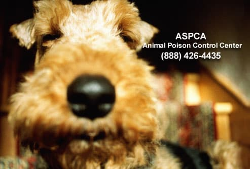 Dog and animal poison control hotline