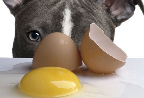 Sad dog and raw egg