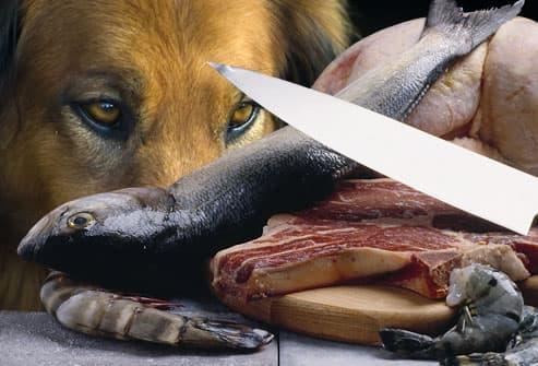 Sad dog and raw meat
