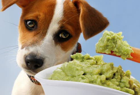 Dangerous Foods Your Dog Should Never Eat