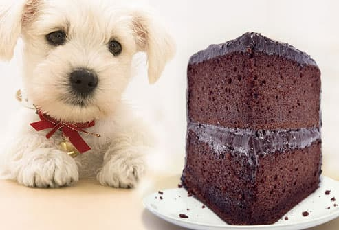 Sad dog gazing at chocolate cake