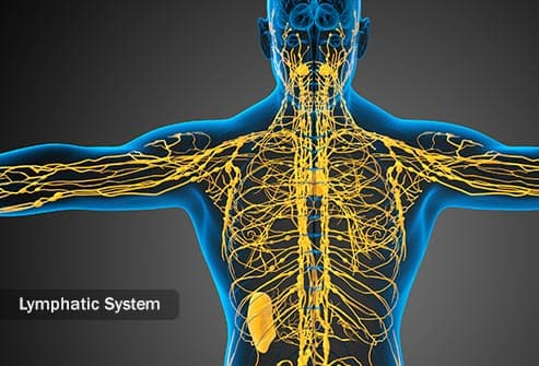lymphatic system illustration