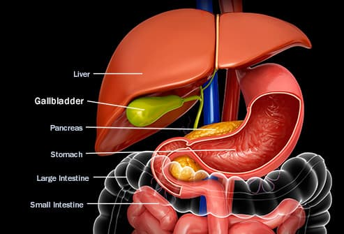 what does your gallbladder do, and what can go wrong?, Human Body