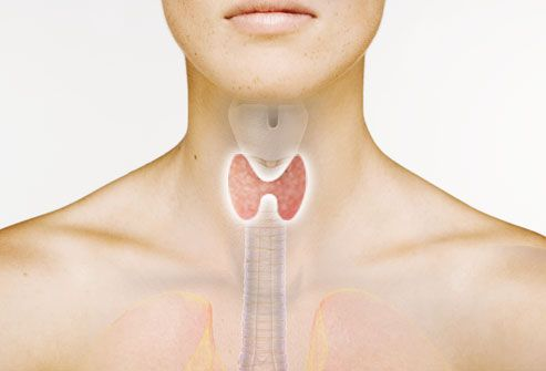 Photo-illustration of thyroid gland on woman