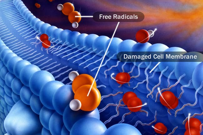 photo of free radicals by cell membrane