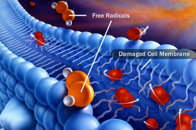 photo of free radicals by damaged cell membrane
