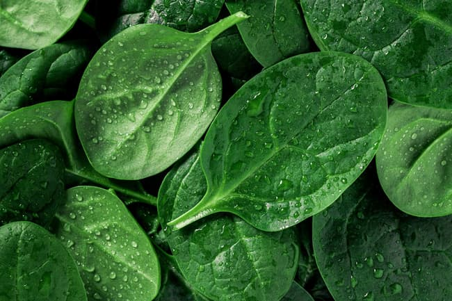 photo of spinach leaves