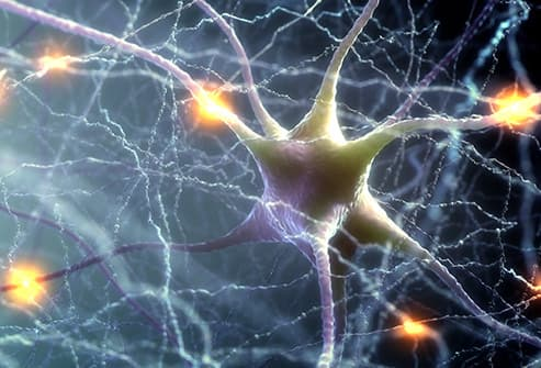 neurons electrical impulses