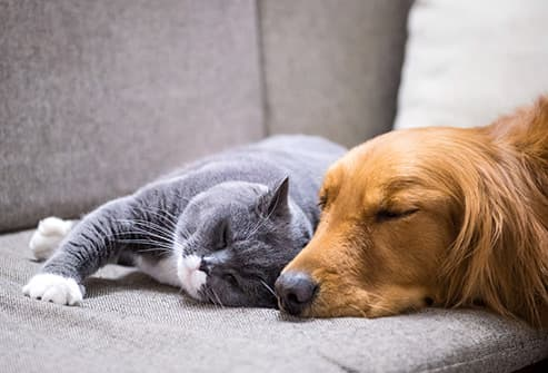 cat and dog sleeping on sofa