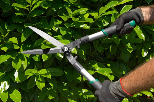 photo of trimming bushes