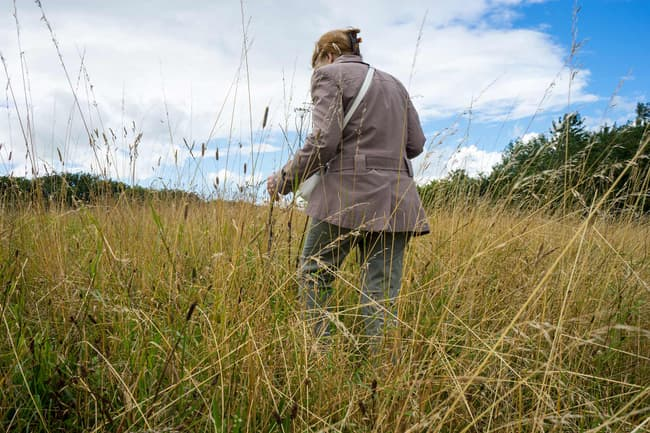 photo of woman walking in tall grass