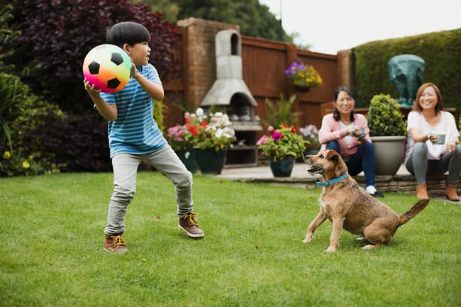 photo of boy playing with dog