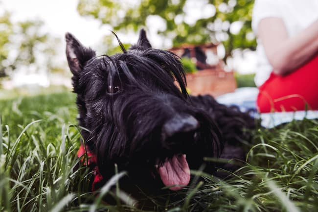photo of dog relaxing on lawn