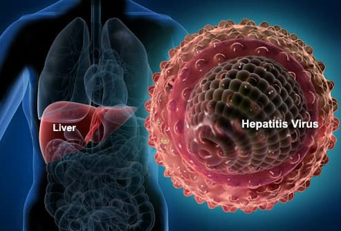 Hepatitis Virus and Liver